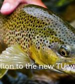 Introduction to TU's new website